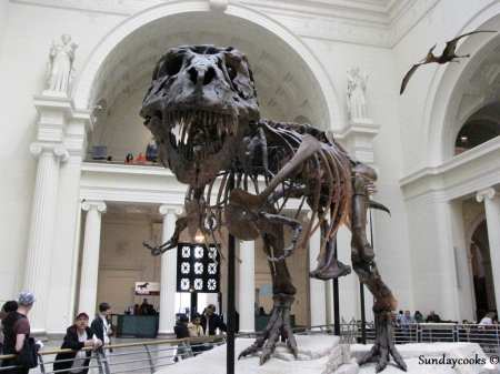 Field Museum Chicago T-rex