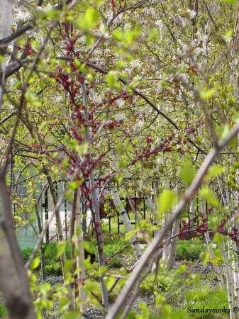 Roteiro de Nova York - Árvores