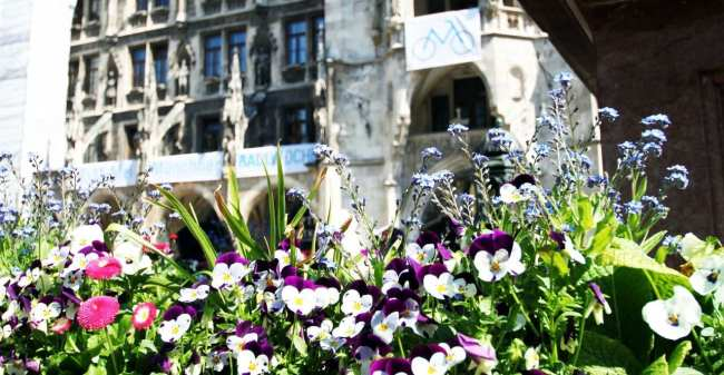 Clima na Alemanha - Flores na Primavera em Munique