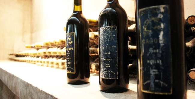 Vinícola Indómita Santiago - vinhos da primeira safra