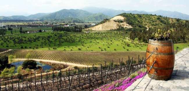 Vinícola Indómita Santiago - Onde são plantadas as uvas 2