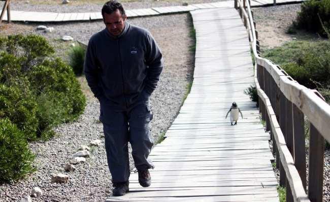 Provincia de Chubut - avistando pinguins 3