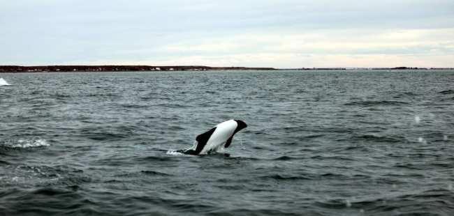 Provincia de Chubut - avistando toninas 3