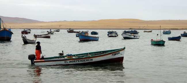 Peru: Ilhas Ballestas e Reserva Nacional de Paracas - 7