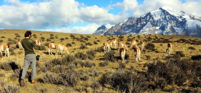 Torres del Paine Patagonia Chilena - Guanacos 1