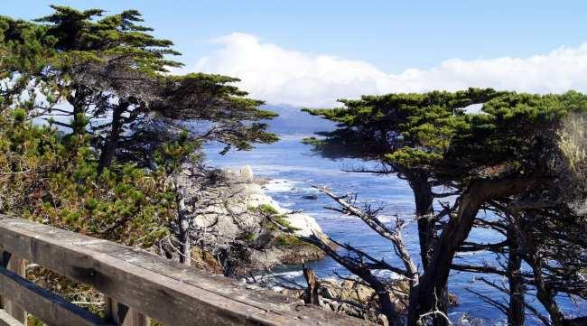 Road trip pela Califórnia de São Francisco a Monterey e Carmel - 15