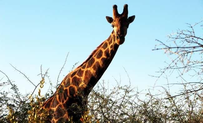 Como é fazer um safári na África do Sul - Madikwe Game Reserve 1