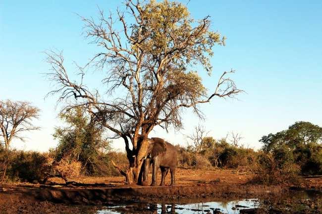 Como é fazer um safári na África do Sul - Madikwe Game Reserve 4
