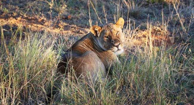 Como é fazer um safári na África do Sul - Madikwe Game Reserve 5