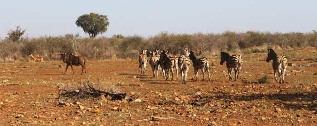 Como é fazer um safári na África do Sul - Madikwe Game Reserve 14