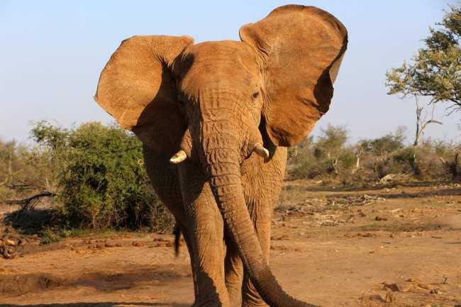 Como é fazer um safári na África do Sul - Madikwe Game Reserve 17