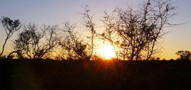 Fazer safari na África - por do sol