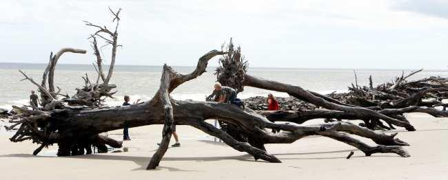 St Simons Island na Georgia Estados Unidos - Driftwood Beach 1