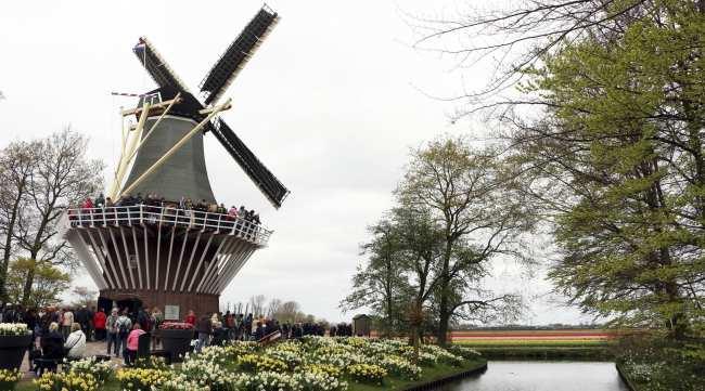 Como ir ao Keukenhof na holanda - jardim de tulipas perto de Amsterdã - 19