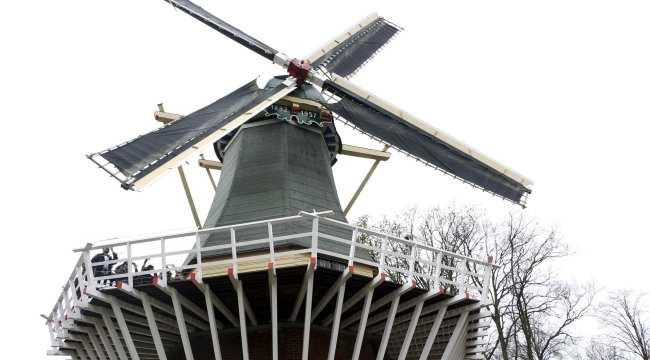 Como ir ao Keukenhof na holanda - jardim de tulipas perto de Amsterdã - 21