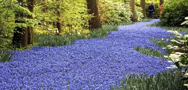Como ir ao Keukenhof na holanda - jardim de tulipas perto de Amsterdã - 27