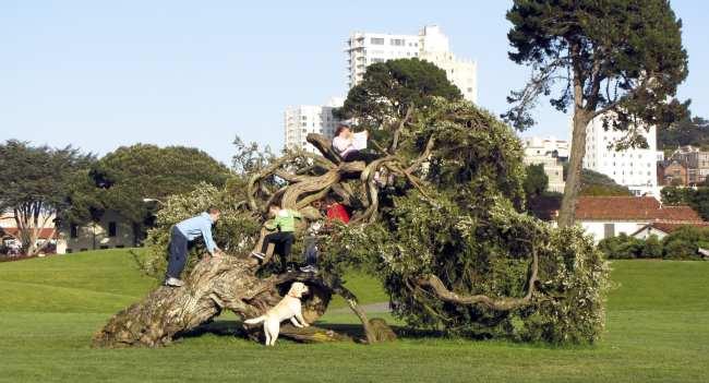 Roteiro por São Francisco - parque 2