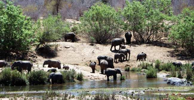 Kruger Park, safári pela África do Sul - 13