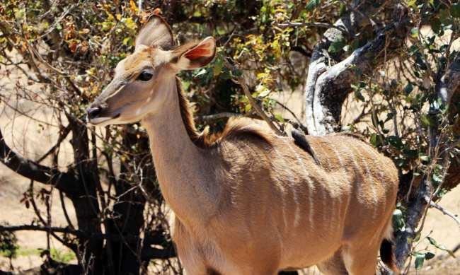 Kruger Park, safári pela África do Sul - 15