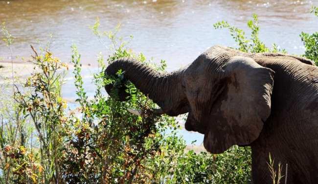 Kruger Park, safári pela África do Sul - 16