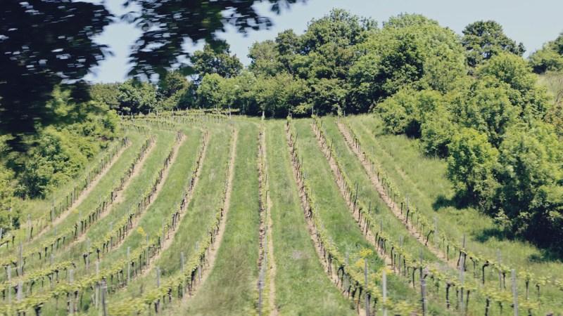 Viena e a tradição dos seus vinhos - maiores vinhedos urbanos da Europa - 02