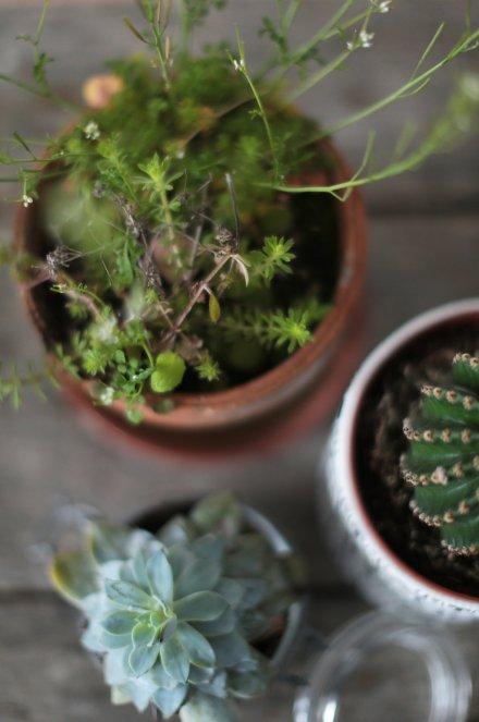 Photos - Dans mon jardin secret photographieans mon jardin secret photographie