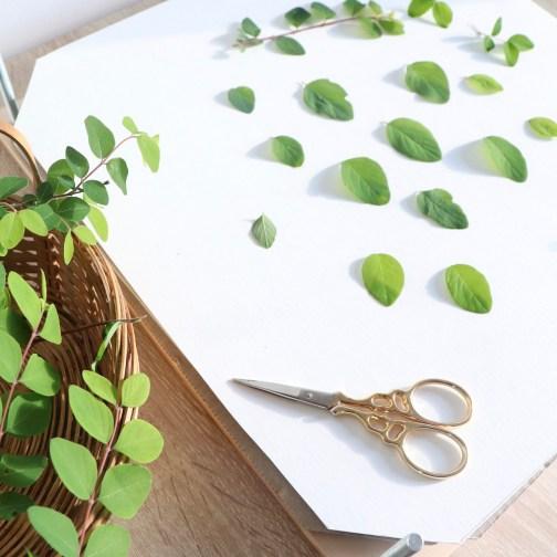 Technique de pressage d'un herbier