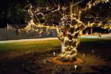 Photo shows tree decorated with lights, candles, flowers, and photos of loved ones