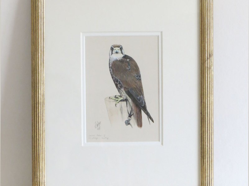 Ken Wood Lanner falcon