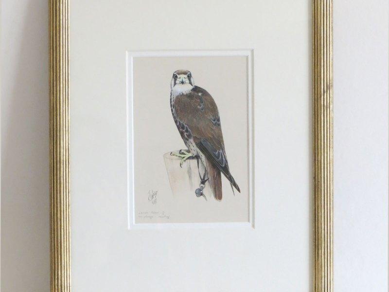 Ken Wood Lanner falcon