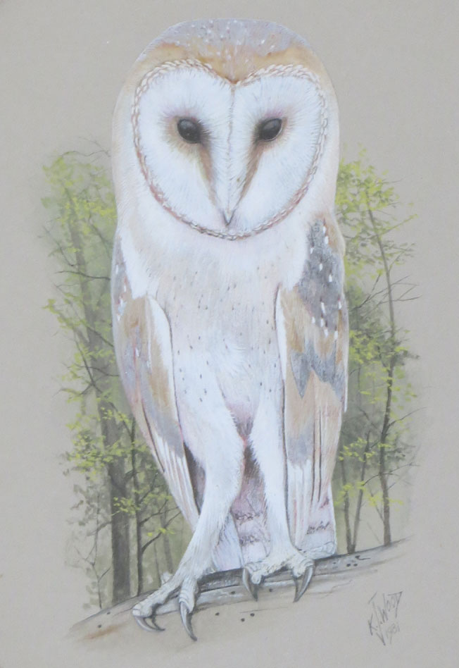 Ken Wood barn owl illustration