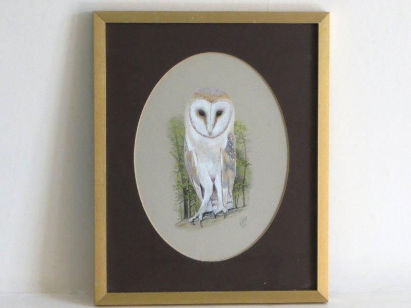 Ken Wood barn owl illustration