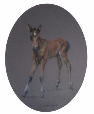 Bay Foal Original pastel by Judy Goodman