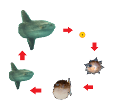 sunfish-lifecycle