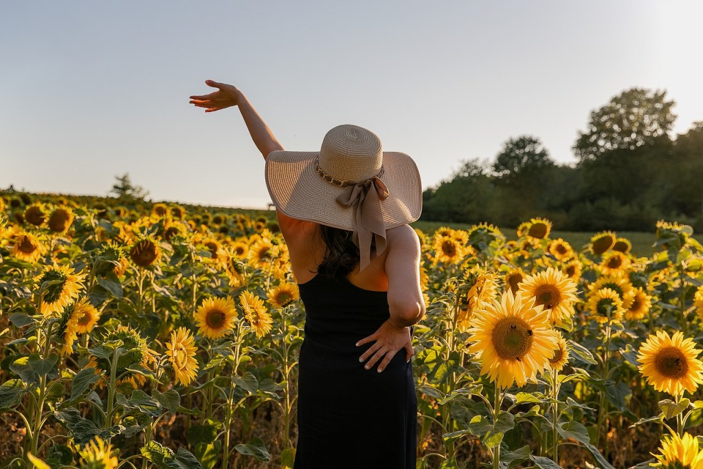 contact, sunflowers, field, flowers