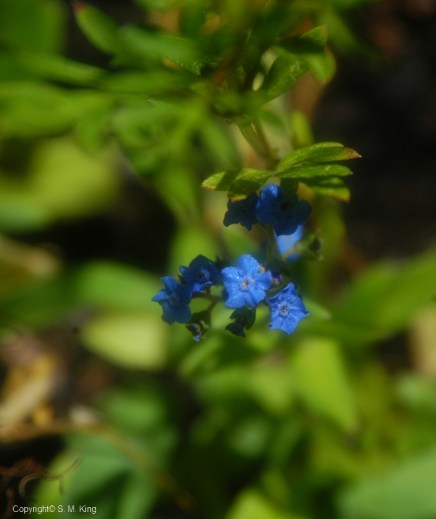 Peek a Blue
