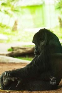 Zoo_Apr9_2014_062