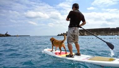 SUP立槳衝浪體驗