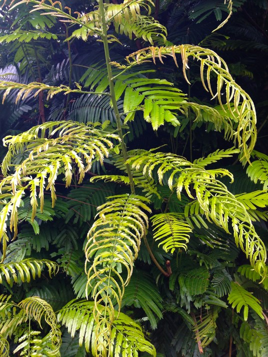 Ferns and foliage... so lovely