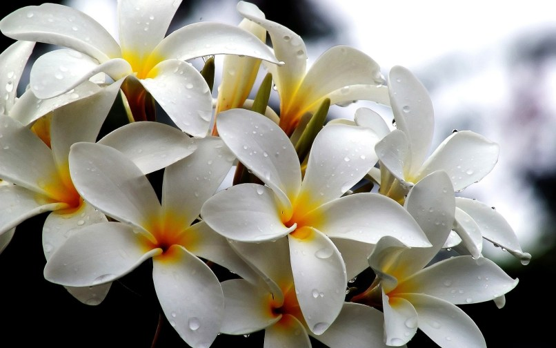 Types Of White Flowers With Names Wajiflower