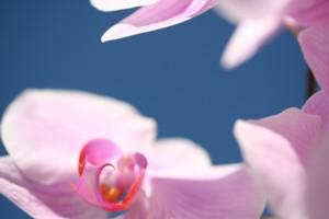 orchide_2_klein