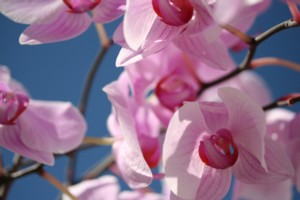 orchide_3_klein