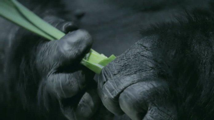 Опровержение эволюции Дарвина - человек произошел от обезьяны