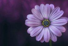 Женщины как цветы