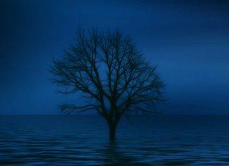Одинокое дерево (будто бойкот)
