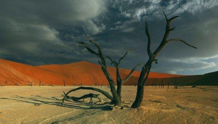 Мертвое дерево, от которого никакой пользы