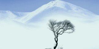 Дерево, страдающее от холода