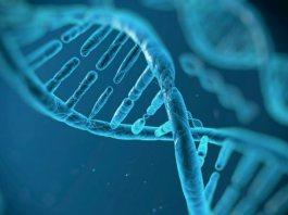 Миф эволюции Дарвина: ДНК человека