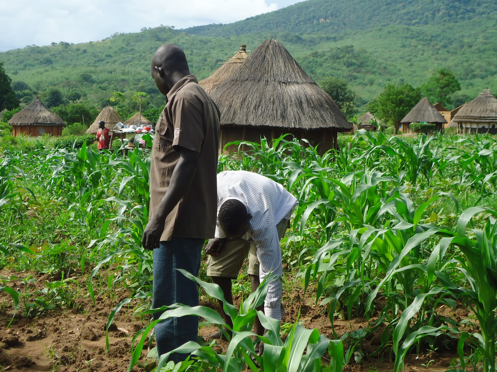 youth farming - Farmers demand stiffer sanctions for those re-bagging local rice