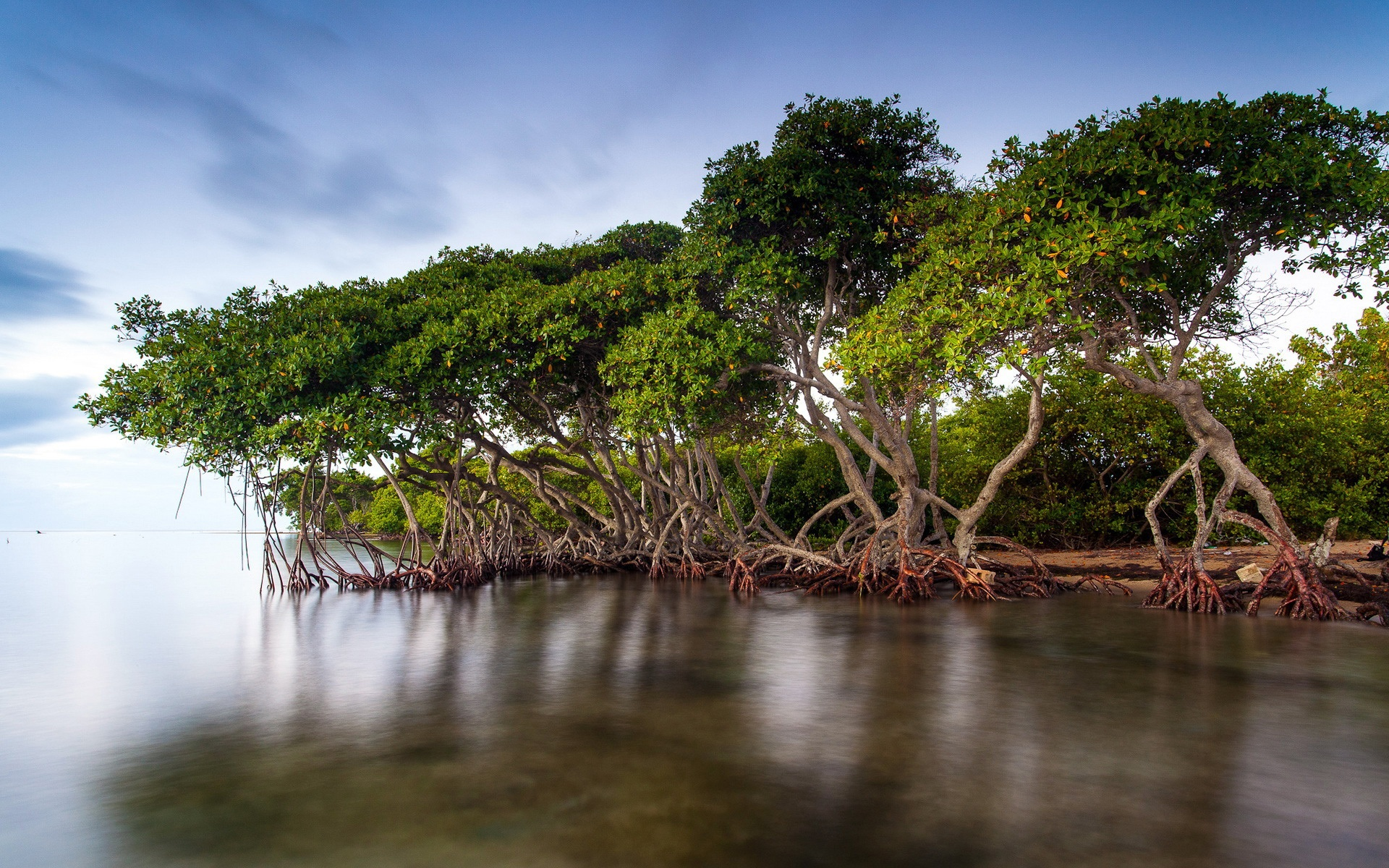 The mangrove forests of the lake scenery 1920x1200 - NNN
